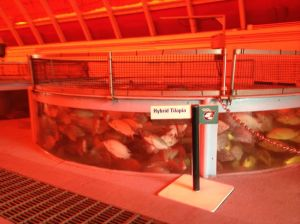 Inside the fish farms