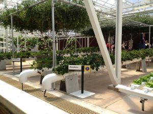 Inside the Greenhouses